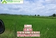 Agriculture Land for Sale ( Land Size= 80 Ha) in Kampong Spe